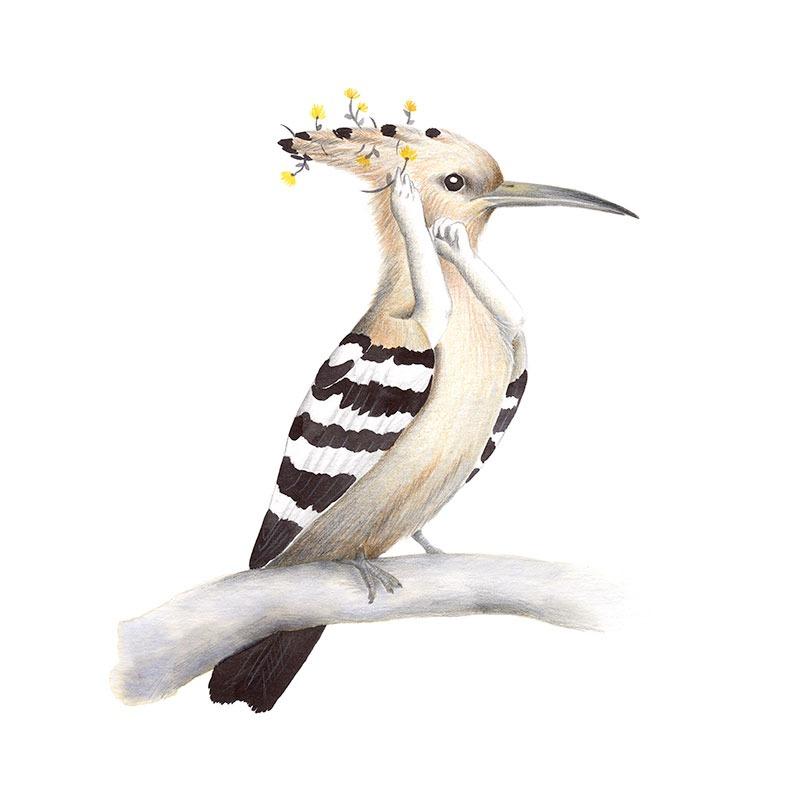 Inktober 2017, Mar Villar, ilustracion de paves, ilustracion de pajaro, ilustracion a tinta, bird illustration, hoopoe, abubilla, upupa epops