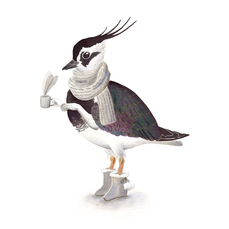 Inktober 2017, Mar Villar, ilustracion de paves, ilustracion de pajaro, ilustracion a tinta, bird illustration, Northern lapwing, avefria, vanellus vanellus