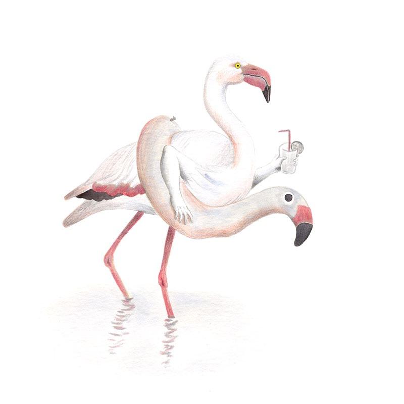 Inktober 2017, Mar Villar, ilustracion de paves, ilustracion de pajaro, ilustracion a tinta, bird illustration, Greater flamingo, flamenco comun, phoenicopterus roseus