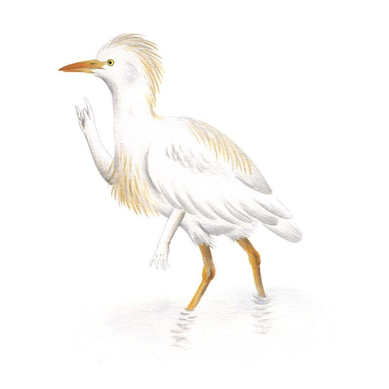 Inktober 2017, Mar Villar, ilustracion de paves, ilustracion de pajaro, ilustracion a tinta, bird illustration, cattled egret, garcilla bueyera, bubulcus ibis
