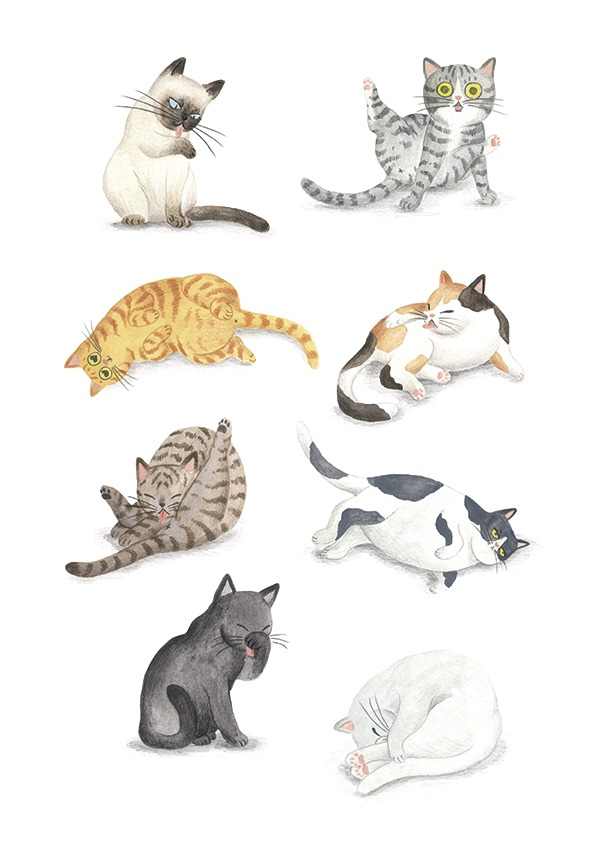 ilustracion de gatos, dibujo de gatos, ilustracion infantil de gatos, razas de gatos, Mar Villar, retratos de gatos, ilustracion personalizada de gatos, gato lavándose, gato lavandose el culo, cat illustration, cat faces, crazy cat lady, cat prints, cats illustration to buy, cats cleaning, tictail prints