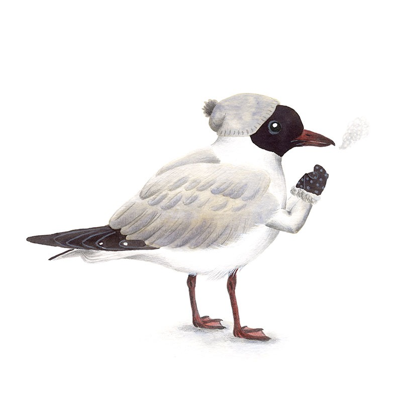 Inktober 2017, Mar Villar, ilustracion de paves, ilustracion de pajaro, ilustracion a tinta, bird illustration, Black headed gull, gaviota reidora, chroicocephalus ridibundus