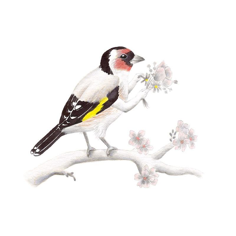 Inktober 2017, Mar Villar, ilustracion de paves, ilustracion de pajaro, ilustracion a tinta, bird illustration, Goldfinch, jilguero, carduelis carduelis