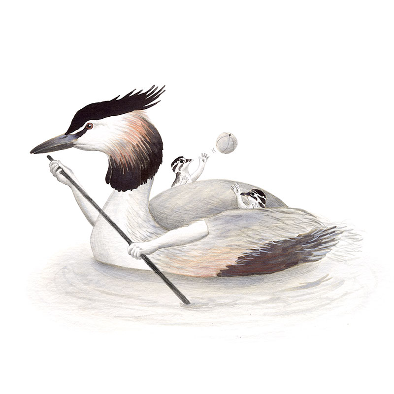 Inktober 2017, Mar Villar, ilustracion de paves, ilustracion de pajaro, ilustracion a tinta, bird illustration, Great crested grebe, somormujo lavanco, podiceps cristatus