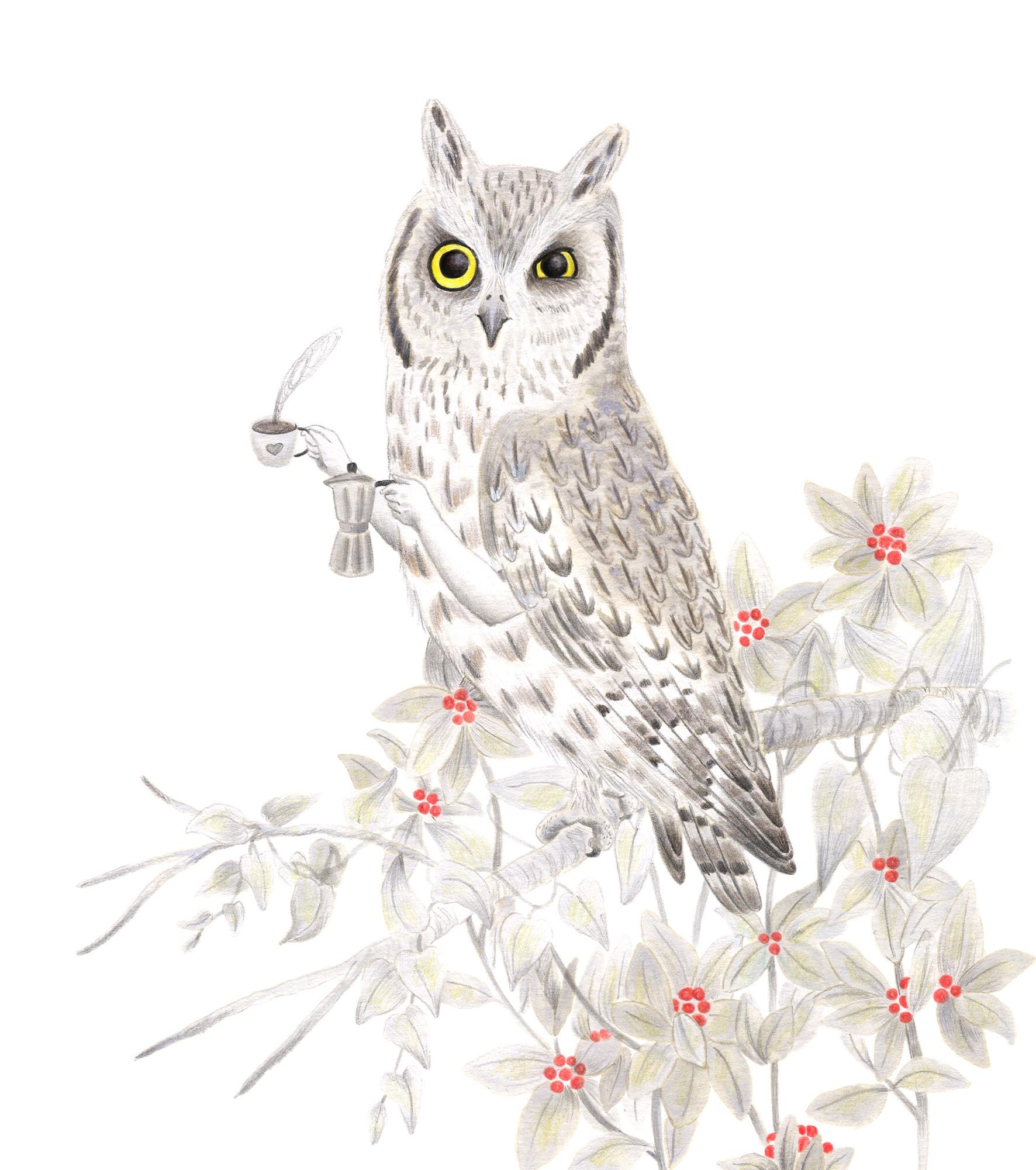 Autillo, Otus scops, ilustración de aves, ilustración de autillo, dibujo de lechuza, scops owl, owl illustration, lechuza comiendo, ilustración de naturaleza, ilustración de animales, ilustración de rapaces nocturnas,