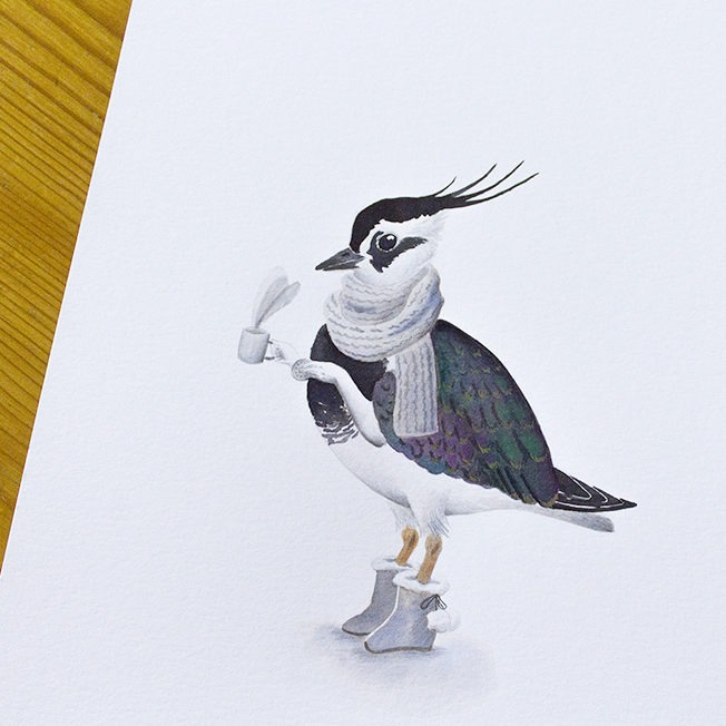 Inktober, lapwing, lapwing illustration, birds illustration, avefría,